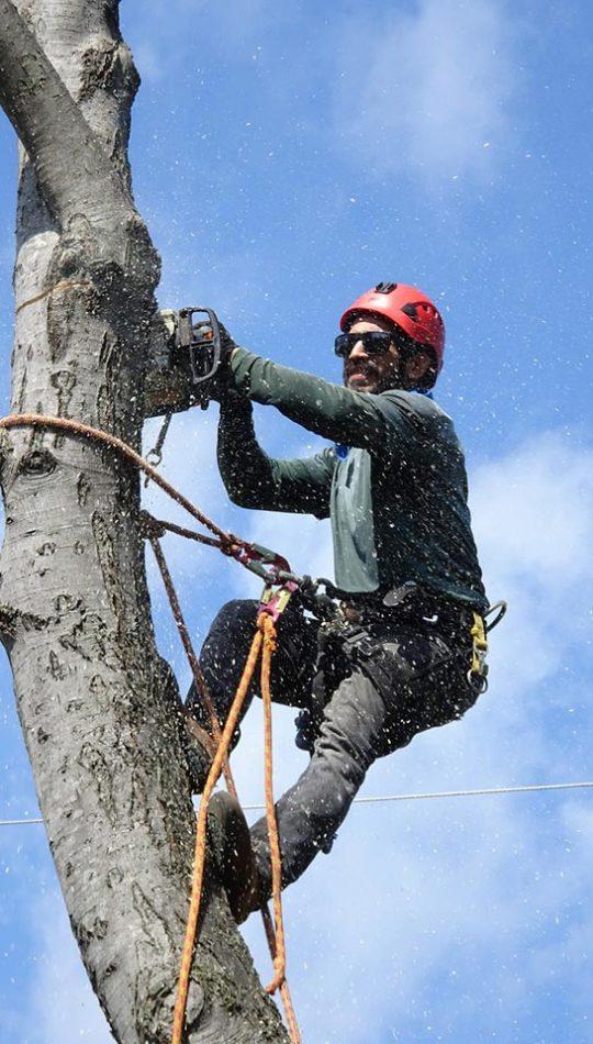 tree-removal-1-720w